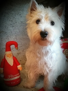 First Christmas, first Santa